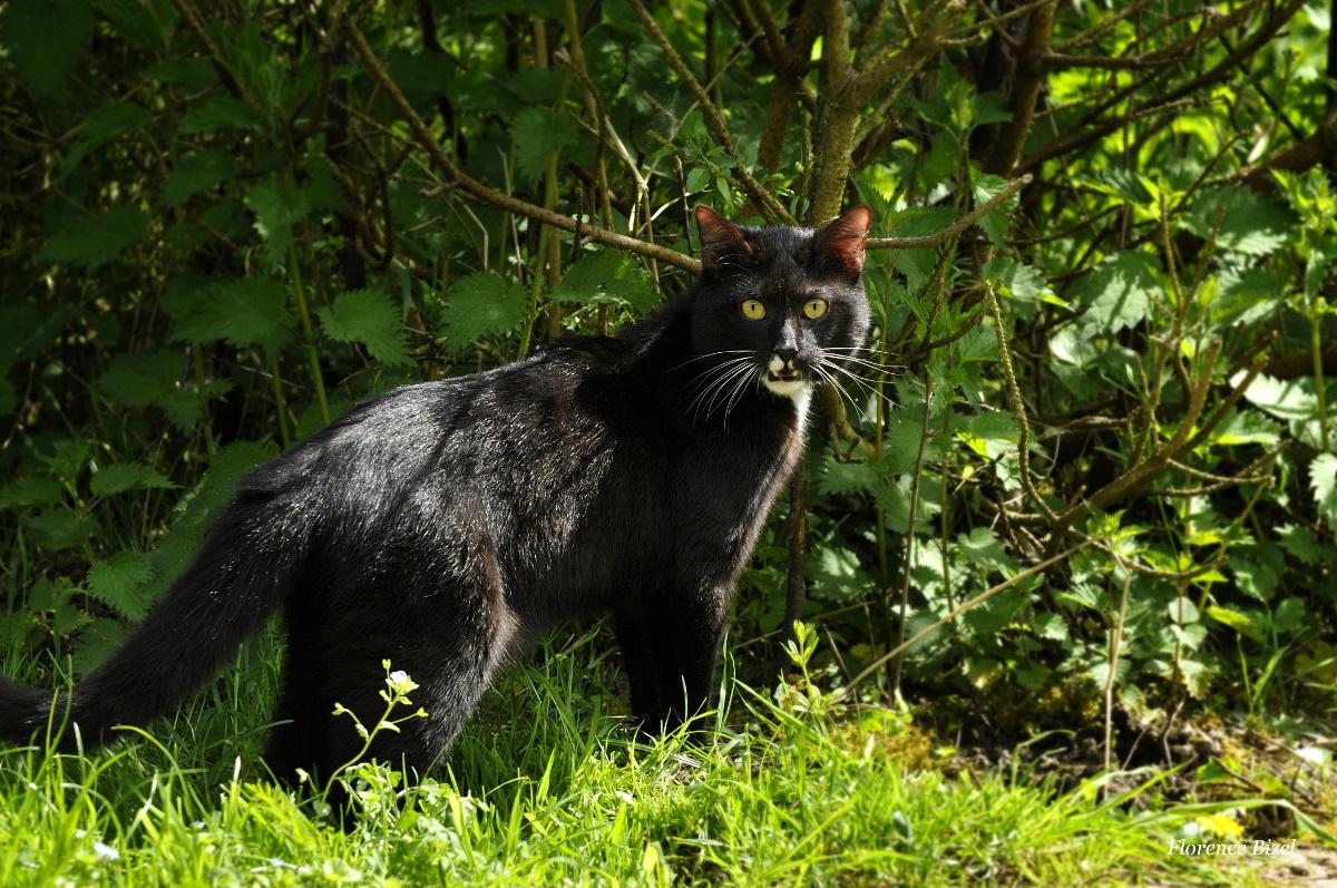 Photo de chat, Mushu au jardin