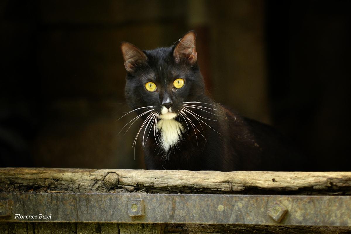 Première sortie pour Mushu… photos de chat